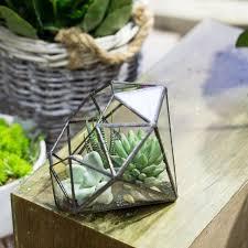 vintage style large eight surface diamond shape succulent plant