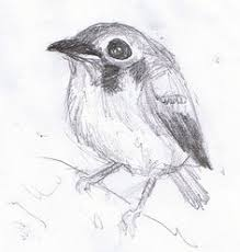 robin bird sketch wedding u003c3 pinterest robin drawing bird