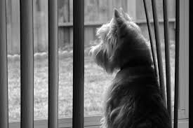 Dog Blinds How To Keep Dogs From Destroying Blinds The Finishing Touch