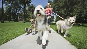 Are All Dogs Colour Blind Which Animals Are Color Blind Animals Mom Me