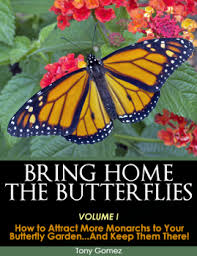 21 tips for starting or improving a butterfly garden