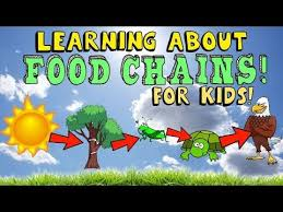 food chain education education pinterest food chains life