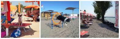 bagno per cani spiagge per cani la top 10 italiana