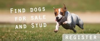 belgian shepherd for sale ireland puppies u0026 dogs for sale in ireland dogs ie