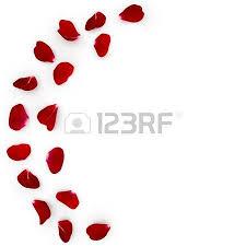 rose petals falling stock photos u0026 pictures royalty free rose