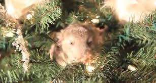 chinchillas make the best tree ornaments rtm