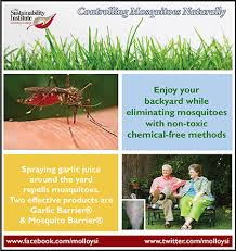 Eliminate Mosquitoes In Backyard by Molloy College Supplement 2 Keep Backyards Mosquito Free Naturally