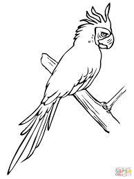 parakeet perched on a tree coloring page free printable coloring