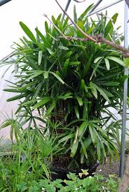 checking on my tropical plants the martha stewart blog