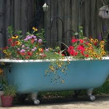 my cast iron claw foot bathtub used as a planter by my pool in the