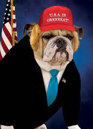 Frowning Dog Meme - dog president funny birthday card hope your birthday s grrreat again