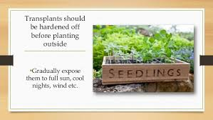 plant the seed vegetable gardening