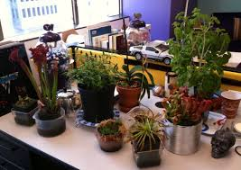 best plant for office easy to care for office plants that help fight the january doldrums
