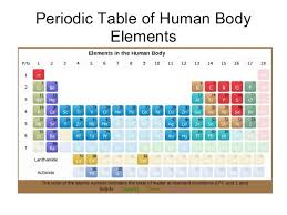 p table of elements periodic table of human body elements 1 638 jpg cb 1390786598