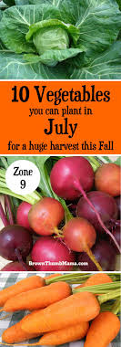 best 25 fall vegetables to plant ideas on fall garden