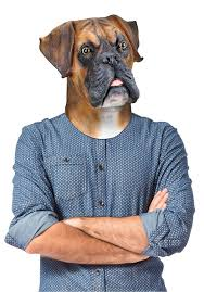 boxer dog on motorcycle amazon com bigmouth inc barry the boxer mask toys u0026 games