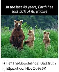 Truth Bear Meme - in the last 40 years earth has lost 50 of its wildlife rt sad truth