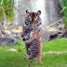 wild animals images Wild animals outofwild twitter jpg