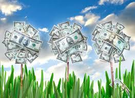 money flowers money flowers stock image image of grow bank grasses 9781689