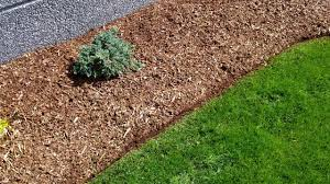 edging clean cut landscape how to properly edge a lawn using
