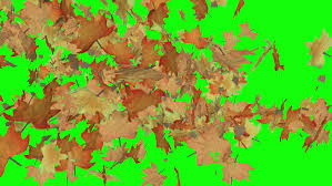 colorful leaves spiral to the ground then away to reveal the