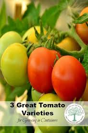 Vegetable Garden Containers by 322 Best All About Tomatoes Images On Pinterest Tomatoes