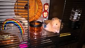 All Living Things Luxury Rat Pet Home by Qute Hamster U0026 Gerbil Cage Stylish Hamster House