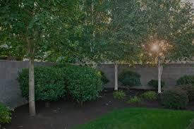 glass tree care spray service inc