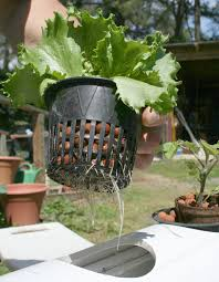 hydroculture passive hydroponics wikiversity