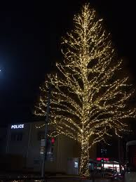 free images branch light night holiday lighting decor