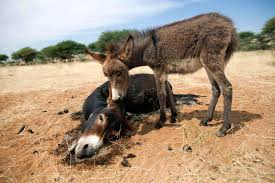animals facing conflict in 2012