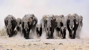 animals dust elephants baby elephant herds wallpaper 23678