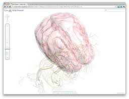 Google Body Anatomy Google Explores The Human Body With Html5