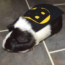 batman costume halloween guinea pig batman costume cape batpig cavy cape by lamarmotacafe
