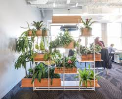 Office Plants by Ted Talks Office Greenery Nyc