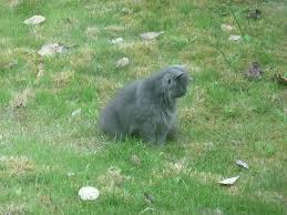 Snake Holes In Backyard Mole Holes In Yard Moles Be Gone Mole Abatement That Works By