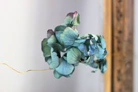 Dried Hydrangeas Dried Hydrangea Garlands For Fall Gardenista