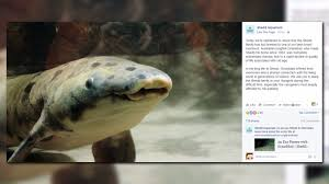 12news com granddad the oldest living fish in captivity has died