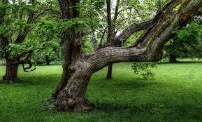 free photo tree nature tree free image on pixabay