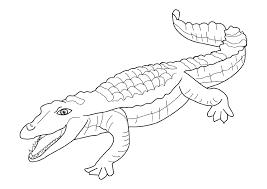 Coloriage Crocodile  Les beaux dessins de Animaux à imprimer et