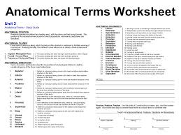 Planes And Anatomical Directions Worksheet Answers Printables Anatomical Directions Worksheet Safarmediapps