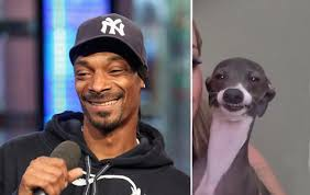 Snoop Meme - snoop dogg s secret soft spot that everyone needs to know barkpost
