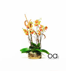 miami flower delivery miami florist flower delivery by orchids arrangements inc