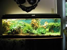 tropical fish decorations for aquariums aquarium plants