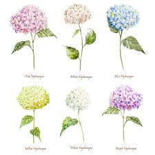 Wedding Flowers July Wedding Flowers Hydrangeas Colors Pink White Blue Yellow