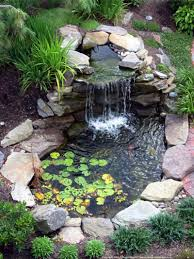 backyard pond designs