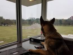 belgian sheepdog houston tx tebben lewis tebbenlewis twitter