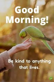 good morning hope quote best 25 good morning animals ideas on pinterest good morning