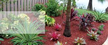 tropical landscaping latest lush tropical landscaping palm beach