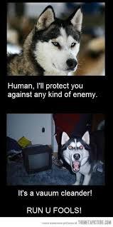 Funny Husky Memes - man s best http bestfriendmemories blogspot com sonny boys